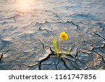 plant growing in desert drought ... | Shutterstock . vector #1161747856
