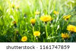 grass and flowers background | Shutterstock . vector #1161747859