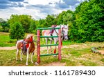 Horse and pony dressed up view. ...