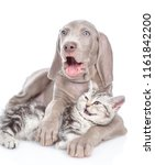 Stock photo laughing cat and dog hugging isolated on white background 1161842200