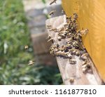 swarm of bees at beehive... | Shutterstock . vector #1161877810