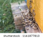 swarm of bees at beehive... | Shutterstock . vector #1161877813