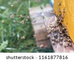 swarm of bees at beehive... | Shutterstock . vector #1161877816