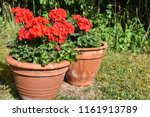 summer decorations with red... | Shutterstock . vector #1161913789