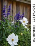white and blue summer flowers... | Shutterstock . vector #1161914056