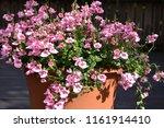 closeup of pink summer flowers... | Shutterstock . vector #1161914410
