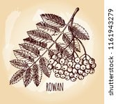 ink hand drawn bunch of rowan... | Shutterstock .eps vector #1161943279