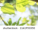 closeup view natural green... | Shutterstock . vector #1161953350