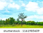 a egret standing on the top of...   Shutterstock . vector #1161985609