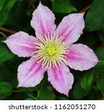 leather flower plants | Shutterstock . vector #1162051270