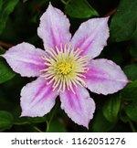 leather flower plants | Shutterstock . vector #1162051276