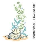 sea shell algae beach hand... | Shutterstock . vector #1162056589