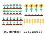 garden bed of bush  sunflower... | Shutterstock .eps vector #1162100896