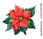 Christmas Plant Poinsettia...
