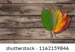 colorful autumn leaves   wooden ...   Shutterstock . vector #1162159846