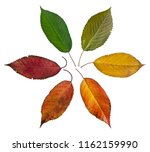 colorful autumn leaves   cycle...   Shutterstock . vector #1162159990