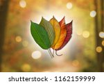 colors of autumn   colored...   Shutterstock . vector #1162159999