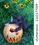 Stock photo halloween feast day of all saints pumpkin carved in the form of a scary face black cat fear averse 1162177009