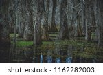 an overcast day in the swamp... | Shutterstock . vector #1162282003