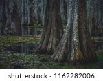 an overcast day in the swamp... | Shutterstock . vector #1162282006