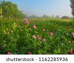 early misty summer morning. | Shutterstock . vector #1162285936