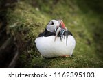 beautiful puffins in stunning... | Shutterstock . vector #1162395103