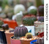 group of cactus in agriculture... | Shutterstock . vector #1162403326