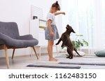 adorable chocolate labrador... | Shutterstock . vector #1162483150