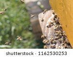swarm of bees at beehive... | Shutterstock . vector #1162530253