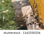 swarm of bees at beehive... | Shutterstock . vector #1162530256