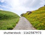 the orange daylily tawny... | Shutterstock . vector #1162587973