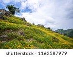 the orange daylily tawny... | Shutterstock . vector #1162587979