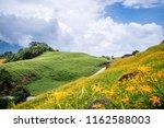 the orange daylily tawny... | Shutterstock . vector #1162588003