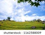 the orange daylily tawny... | Shutterstock . vector #1162588009