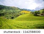 the orange daylily tawny... | Shutterstock . vector #1162588030
