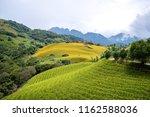 the orange daylily tawny... | Shutterstock . vector #1162588036
