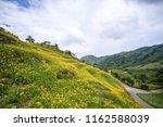 the orange daylily tawny... | Shutterstock . vector #1162588039