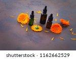 marigold or calendula essential ... | Shutterstock . vector #1162662529