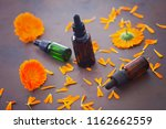 marigold or calendula essential ... | Shutterstock . vector #1162662559