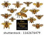 honey bee bumblebees wasps set... | Shutterstock .eps vector #1162676479