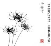 three black chrysanthemum... | Shutterstock .eps vector #1162735963
