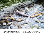 rocks and wood at the water's... | Shutterstock . vector #1162739449