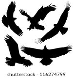 eagle silhouette on white... | Shutterstock .eps vector #116274799