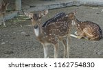 deer with beautiful antlers | Shutterstock . vector #1162754830