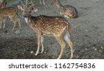 deer with beautiful antlers | Shutterstock . vector #1162754836