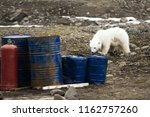 polar bears in arctic. due...   Shutterstock . vector #1162757260