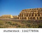 natural food crops harvest in...   Shutterstock . vector #1162778506