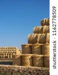 natural food crops harvest in...   Shutterstock . vector #1162778509
