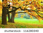 autumn trees | Shutterstock . vector #116280340