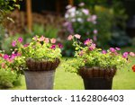 pot plants with pink and violet ...   Shutterstock . vector #1162806403